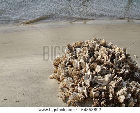 A large cluster of oyster shells and a few barnacles on the beach at the water's edge.