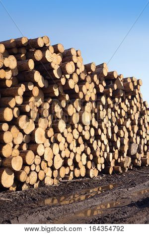 Many sawed pine logs stacked in big pile over clear blue sky side view vertical closeup