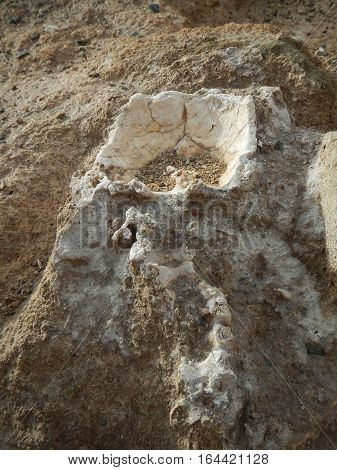 Skull And Bones In An Ancient Excavation Site