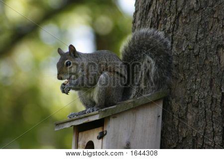 A Squirrel Atop Of A Bird Box