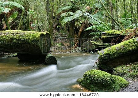 Stream in the forest at Mt Field National Park, Tasmania