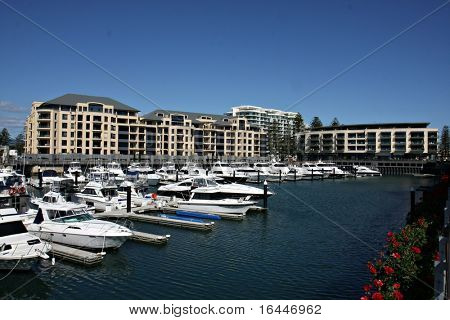 Bright yellow flowers and marina in Glenelg - Adelaide