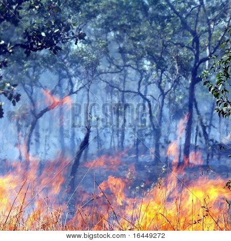 Flames of a bushfire in the Australian outback - focus on flames in foreground
