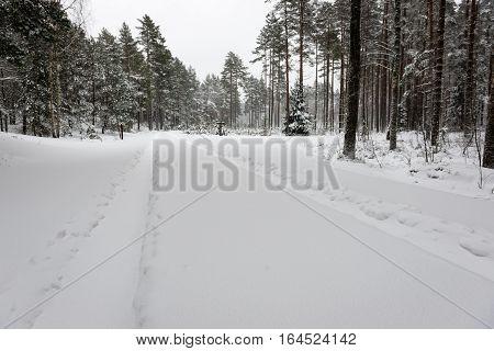 Car Tire Tracks On Winter Road