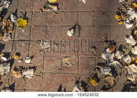 Natural stamped concrete pavement texture outdoor flooring with leaves, decorative appearance of tiling, mimics colors and textures of material pavers, red tiles pattern, top view