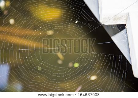 Spider web close-up.The shot of the big cobweb close-up with the branch in it and the bright background