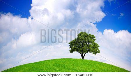 Globale Ökologie