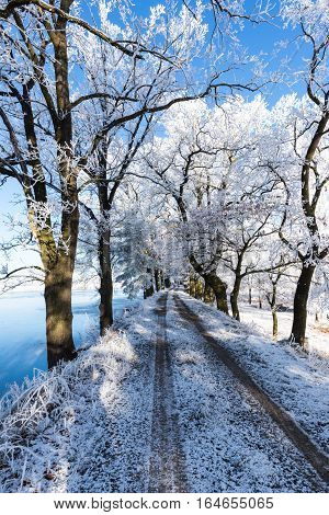 Footpath On The Dyke Of Small Pond With Frozen Trees On Both Sides