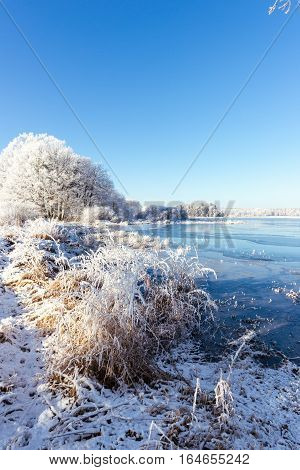 Frozen Pond With Several Snowy Trees And Reed On Side