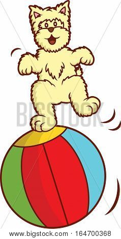 Westie Dog Playing with Big Ball Cartoon Vector Illustration Isolated on White