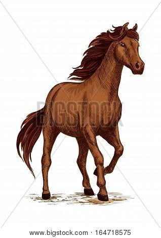 Running horse sketch of brown arabian stallion. Galloping purebred horse of arabian breed. Horse racing symbol, equestrian sport badge, t-shirt print design