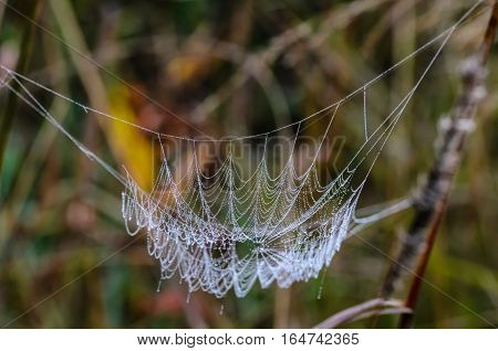 Spider web with drops of dew which is similar to a hammock