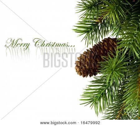 branch of Christmas tree on white