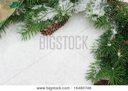 rama del árbol de Navidad en la nieve blanca