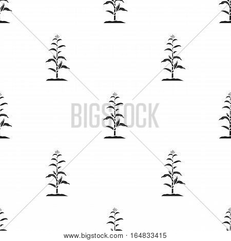 Corn icon in black style isolated on white background. Plant pattern vector illustration.