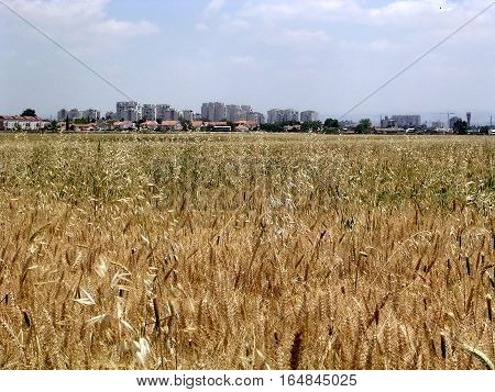 Field near Tel Aviv Israel April 24 2005