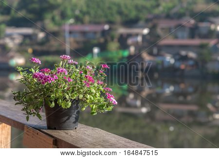 Beautiful flowers in vase on wooden railings. Blurred background