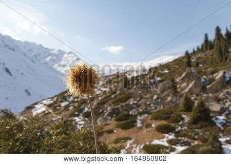 Burdock On Background Of Mountains