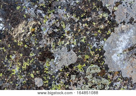 Texture Of Stone Overgrown With Moss