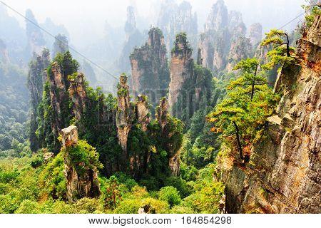 Fantastic Top View Of Quartz Sandstone Forest (avatar Rocks)