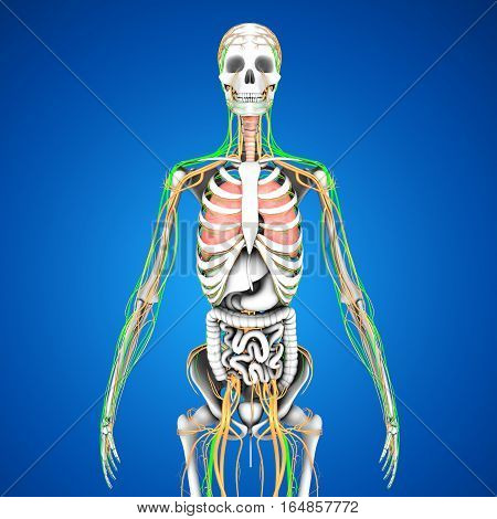 The human body is the entire structure of a human being and comprises a head, neck, trunk , arms and hands, legs and feet.