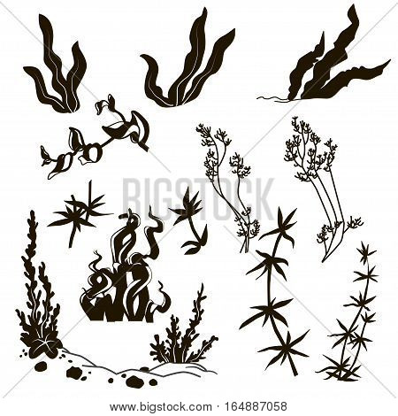 Set of black design elements isolated.Collection of marine plants leaves and seaweed coral. set hand drawn marine flora. Isolated vector illustration in line art style.Design for summer beach decorations.Vector. EPS 10
