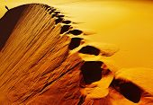 Постер, плакат: Следы на песчаных дюн пустыня Сахара Алжир
