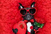 Valentines Dog In Love poster