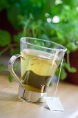 stock photo of tea bag  - Green tea bag in glass tea cup - JPG