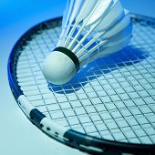 pic of game-cock  - Badminton racket and shuttlecock on its strings - JPG