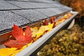 stock photo of gutter  - Leaves in a rain gutter - JPG