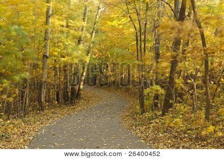 Breezy Fall Trail