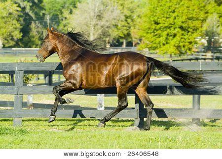 Beautiful Horses 132. See more in my portfolio