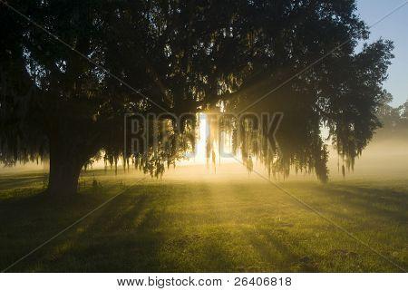 Asombrosa luz de sol brillante en niebla 25
