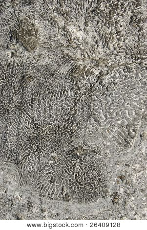 Sea coral background fossil ocean texture -- series 03