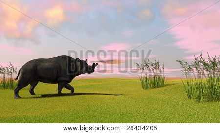 brontotherium on field