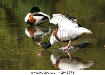 Duck Lookup