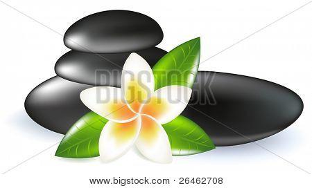 Fragipani mit Blättern und Spa Steine, isoliert auf weiss