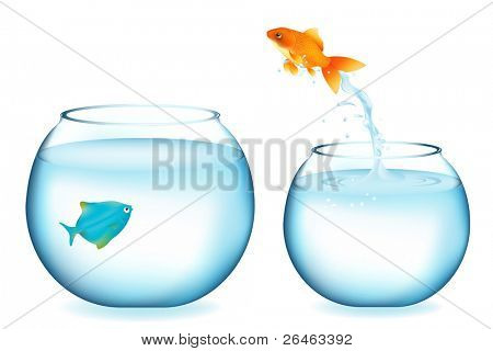 Golden Fish Jumping To Other Fish, Isolated On White