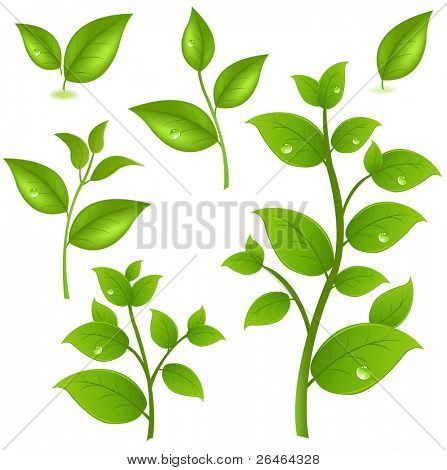 Collection Of Green Branches, Isolated On White Background