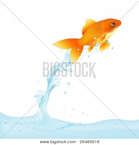 Goldfish Leaping Out Of Water, Vector Illustration