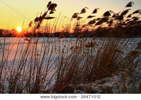 Sunset I.