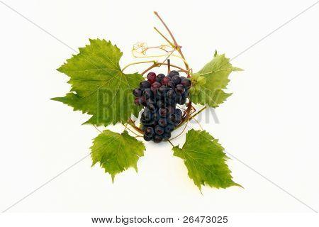 Vine grape and vine leaf