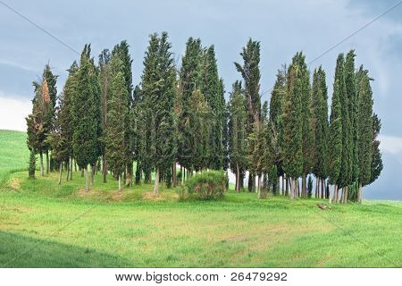 Beautiful and much frequented by tourist cypress grove