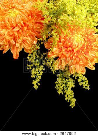 Chrysanthemums And Goldenrods