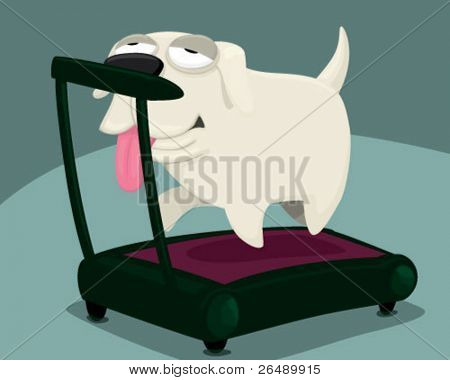 A dog doing exercises.