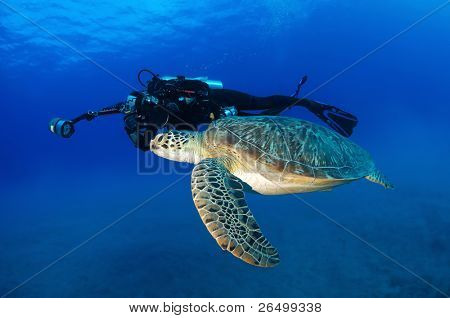 Underwater photographer taking photo of a green turtle.
