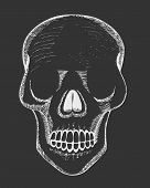 Human Skull. Hand Drawn Vector Illustration Of Human Human Skull. Hand-drawn Human Skull On A Black  poster