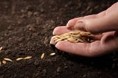 foto of humus  - sowing seed - JPG