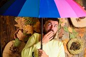 Hipster With Beard Mustache Expect Rainy Weather Hold Colorful Umbrella. Man Bearded Lay On Wooden B poster